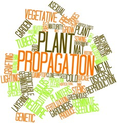 Word cloud for Plant propagation