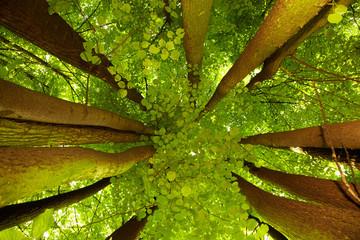 Tuinposter Aan het plafond Under greenery - the beech canopy