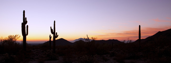 Photo sur Plexiglas Cactus Saguaro Cactus at Sunrise Panoramic