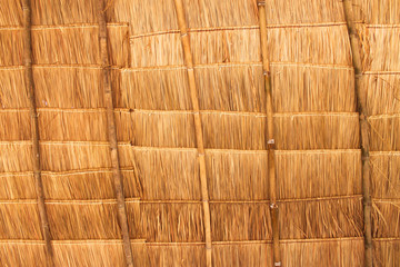 Rural house roof made of cogon grass