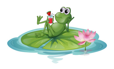 A frog relaxing on a leaf