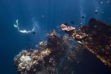 Wall Mural - Underwater