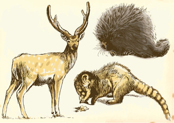 Collection of three animals - Deer, Coati and Porcupine.