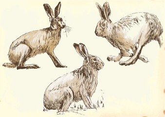 Collection, three studies hare in motion.