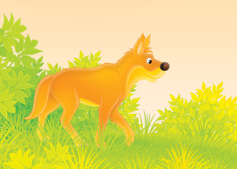 Fotobehang Bosdieren Wild dog dingo