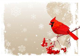 Red Cardinal bird background