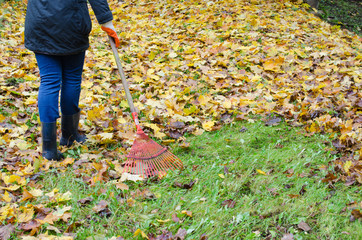 woman red rake tool hand garden work leaves autumn