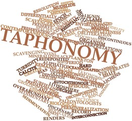Word cloud for Taphonomy