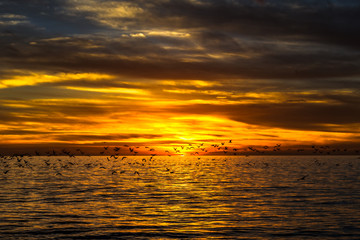 dramatic golden sunset over the ocean with flying seagulls