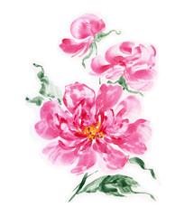 Watercolor painting pink peonies