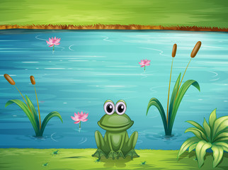 Canvas Prints River, lake A river and a frog