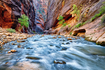 Canvas Prints Natural Park view of the Virgin River