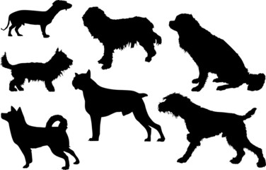 set of seven isolated dogs