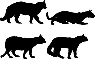 four isolated cats collection