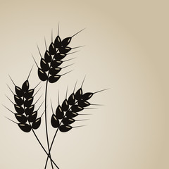 Fototapete - Wheat background