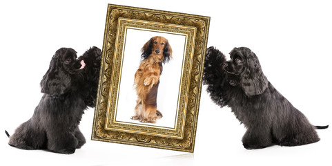 dog portrait in a gold frame