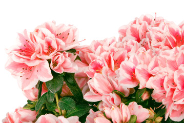 The big bouquet of pink colours (Clipping path)