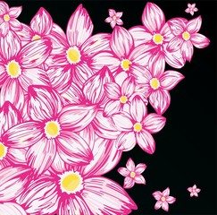 Pink flowers on the black