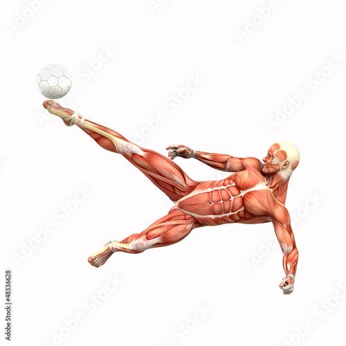 Fussballspieler Fallrückzieher Muskel Anatomie\