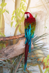 Green-Winged macaw in nature surrounding