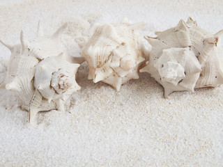 marine shells on sand