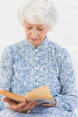 Elderly focused woman reading a old novel