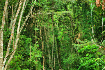 rainforest east of Mareeba, Far North Queensland
