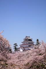 Aizuwakamatsu Castle and cherry blossom,Fukushima, Japan