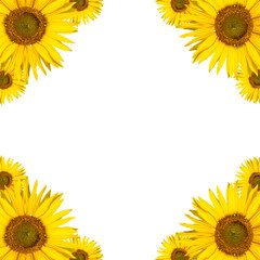 sonnenblume hintergrund