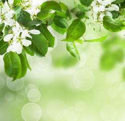 Spring blossom - floral border of green leaves