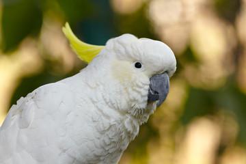 White parrot bird