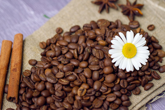 coffee beans with chamomile