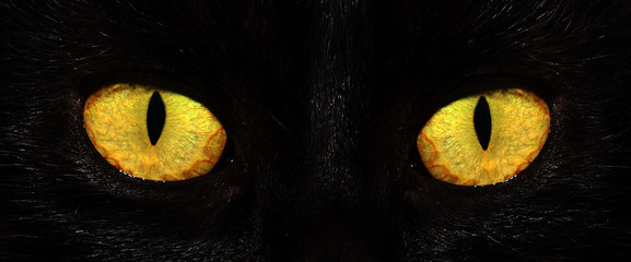 Keuken foto achterwand Panter eyes of black cat in dark