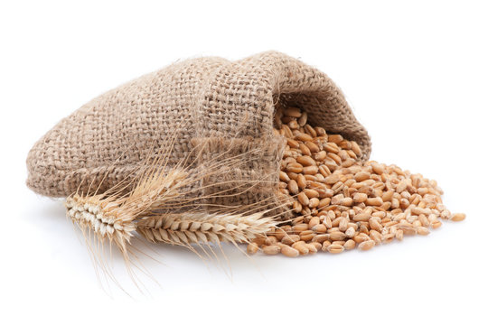 Seed in small burlap sack