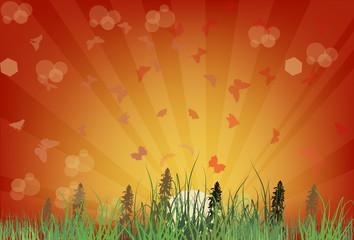 butterflies in green grass at red sunset