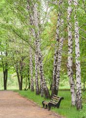 Spoed Foto op Canvas Berkbosje wooden bench in the park