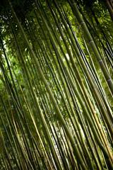 Wall Mural - Bambou, Asie, forêt, bois, jardin, parc, vert, nature