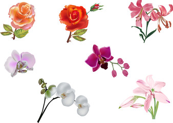 seven isolated color flowers illustration