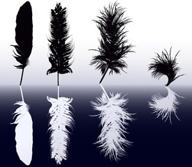 eight white and black feathers