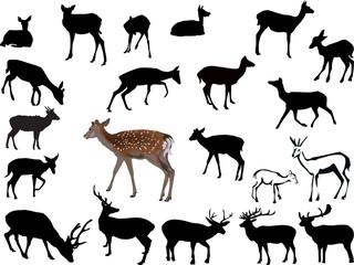 twenty one deers illustration