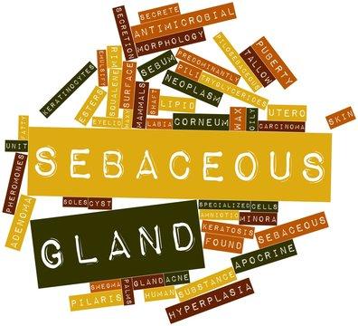 Word cloud for Sebaceous gland