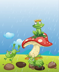 Aluminium Prints Magic world Frogs playing in the rain