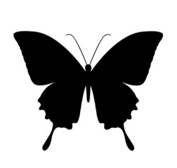 butterfly, black silhouettes on white background