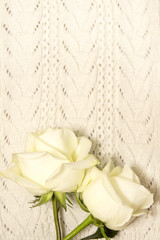 White roses over knitted texture