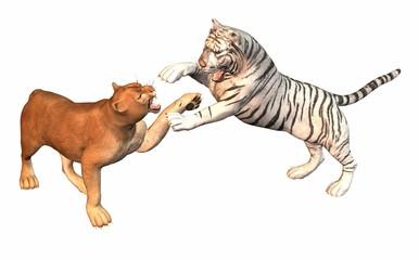 puma contre tigre