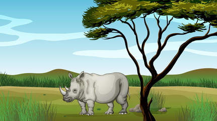 A bull in the forest