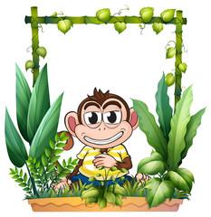 A monkey smiling