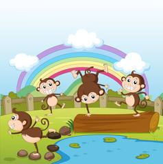 Monkeys and a rainbow