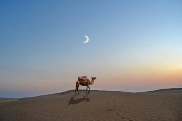 Tuinposter Tunesië Camel in the desert sand of the Sahara - Tunisia, africa