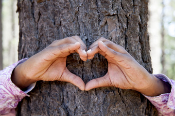 hands making an heart shape on a trunk of a tree.